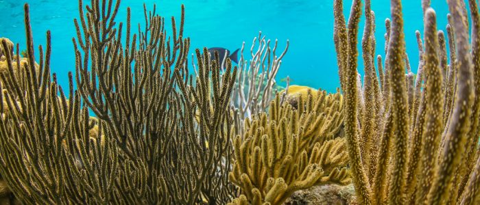 Coral Reef at Rum point with Crystal Charters