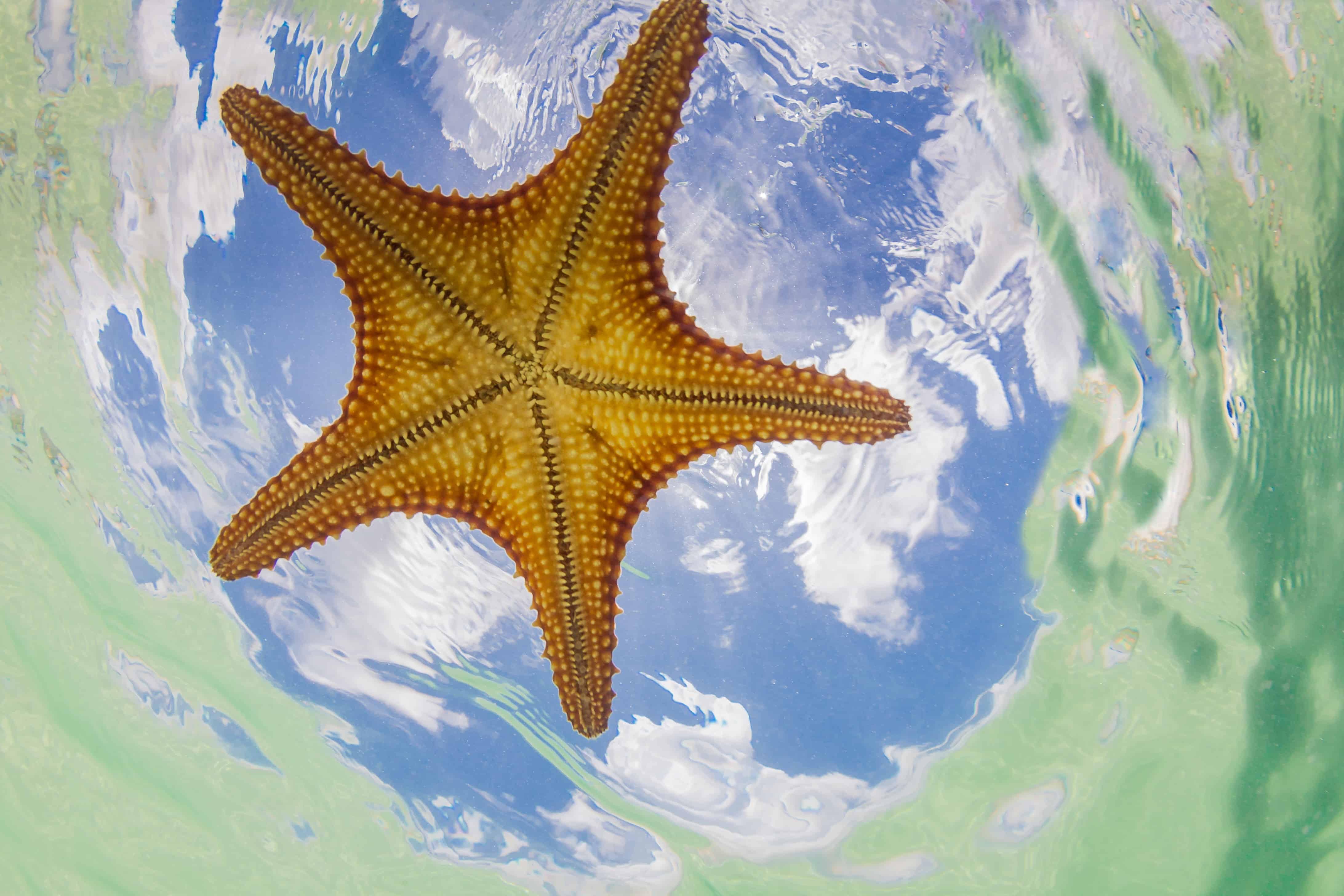 Shaking Hands With Starfish In Grand Cayman