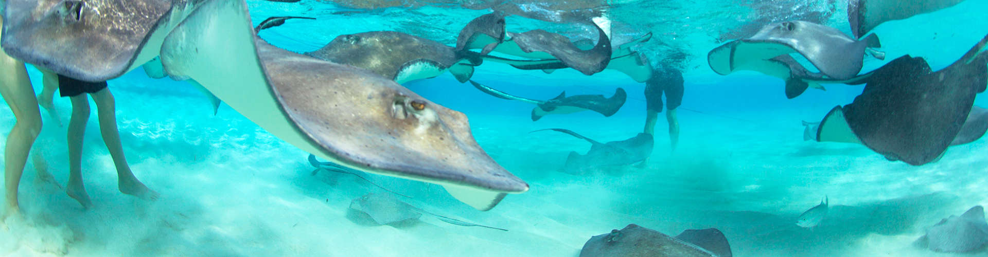 Stingray City Charter